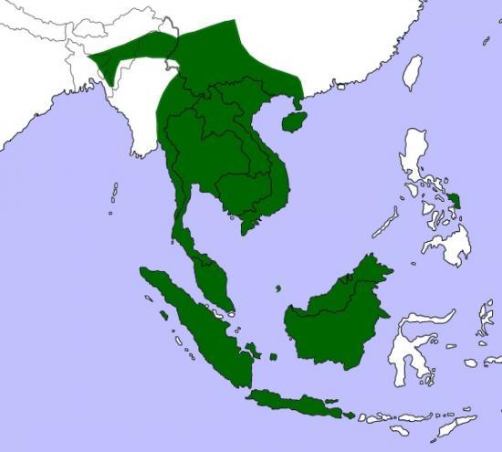 phodile-d-asie-habitat-phodilus-badius-range.jpg
